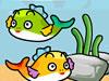 飼養小金魚