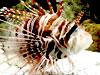 熱帯魚パズル