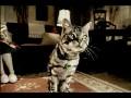 サーカー大好き猫